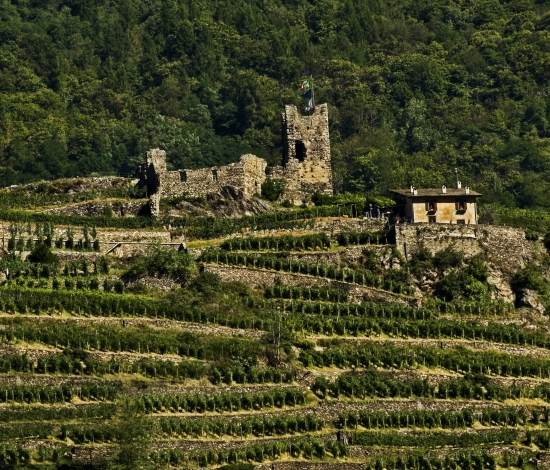 Route through Valtellina's terraced Vineyard